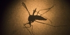 Zika virus can be sexually transmitted