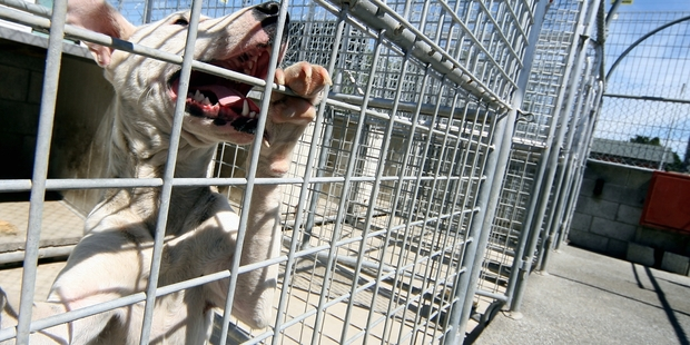 CONTROVERSIAL: Dogs have been gassed at the Ridgway St facility.