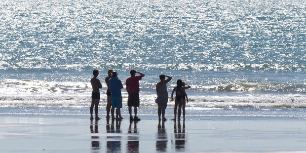 Swimmers stay on the shore after five sharks were spotted. Photo / Mark Mitchell