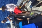 Peter Thomas  and Ryan McCulloch happy with his first marlin out of Opito Bay.