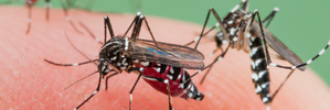 Why don't we wipe out mosquitoes?