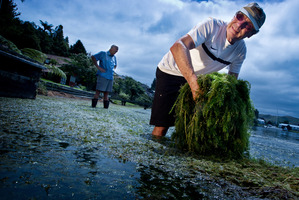 Okawa Bay residents Don Atkinson (right) and Richard Amery are concerned at the levels of lakeweed in Lake Rotoiti. PHOTO/STEPHEN PARKER