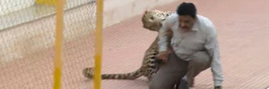 Leopard attacks three at school