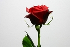 Why you shouldn't buy red roses for Valentine's Day