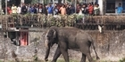 Watch: Raw: Elephant rampages through Indian town