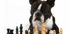 Doggy IQ test: How smart is your pooch?