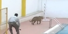 Leopard attacks people at Indian school