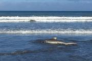 Matt Gibbins was at Te Horo beach, the next beach over from Peka Peka beach where yesterday's sharks were seen. Photo / Supplied