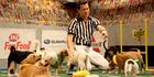 Puppy Bowl: Team Fluff v Team Ruff