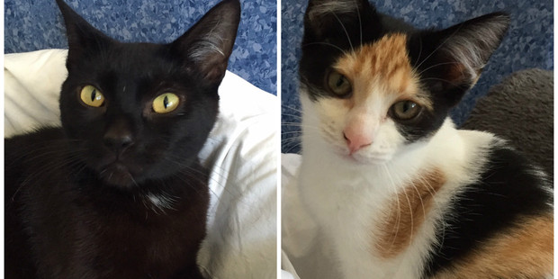 Matilda and Miranda are a friendly pair, keen to be adopted together.