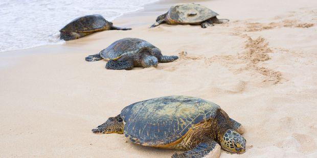 Wildlife at Turtle Bay.
