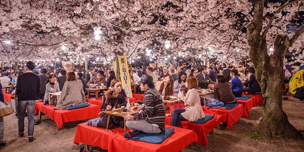 You can save money and enjoy the cherry blossom season by travelling to Japan in April. Photo / 123RF