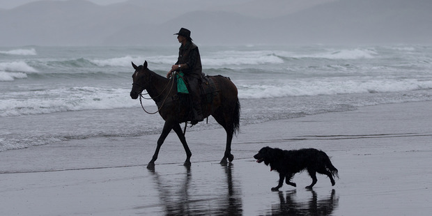 A lone horseman and his dog make their way along Ngarunui Beach at Raglan in wet, dismal conditions as wet weather decended on the North Island. Photo / Alan Gibson