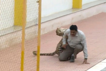 The leopard which injured five people after roaming into a school in Bangalore, India, has escaped from a zoo. Photo / AP