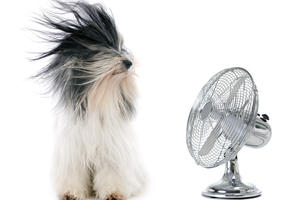 Looking for a fan this summer? Unfortunately you're out of luck.