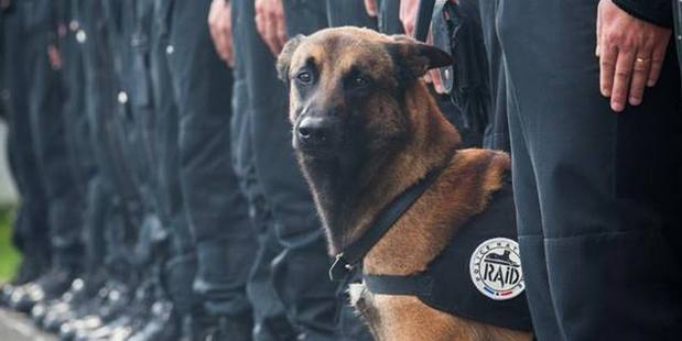 Diesel the police dog was killed in action during the Paris terror attacks. Photo / Police Nationale Facebook