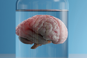 Scientists grow brains in lab that think on their own