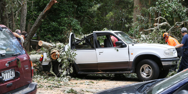 A tree fall on a car at Cornwall Park Auckland today after family members were inside just moments before. Photo / Doug Sherring