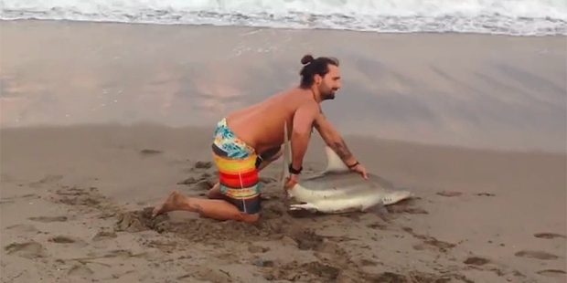 The man pulled the shark from the water to take photos with it. Photo / Facebook