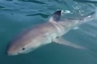 A Whangarei man had a close encounter with a great white shark, capturing the exciting moment on video.