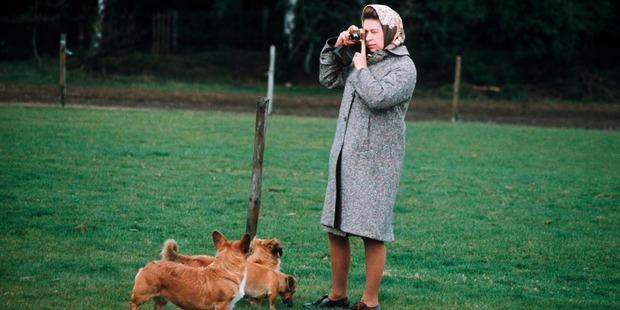 Queen Elizabeth II in Windsor Park photographing her corgis in 1960. Photo / Getty Images