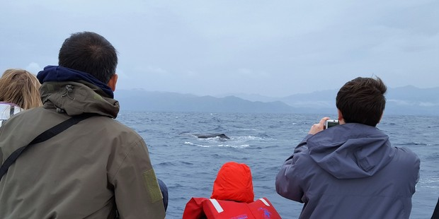Excited tourists catch a glimpse of a sperm whale. Photo/Whale Watch Kaikoura