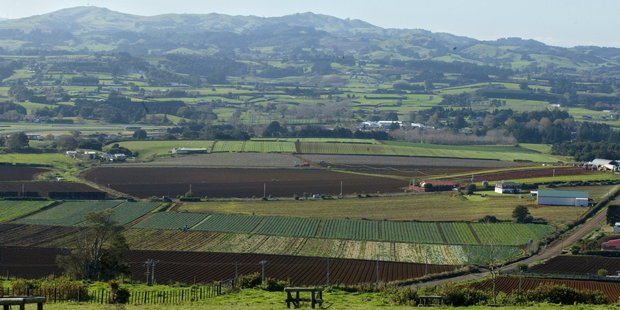 Farming land around Pukekohe. Photo / Paul Estcourt