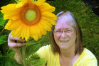 Patrice Bogert says she can afford a huge garden in Whanganui, with fantastic soil for her sunflowers. PHOTO/STUART MUNRO