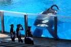 SeaWorld orca Tilikum has died. Photo / AP