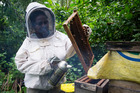 Caroline Alick checks bee hives bought and developed by the Forau Economic Development committee. Photo / Mike Scott