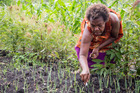 A woman does some gardening in an informal settlement on the outskirst of Port Moresby. Photo / Mike Scott