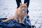The real-life Bob played himself in the film version of A Streetcat Named Bob.