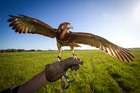 It is an honour to observe birds of prey hunting their food. Photo / Getty Images