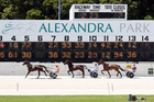 While it is still Cup week in Auckland, the Trotting Cup has moved to December 31. Photo / Photosport