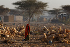 A Somali woman, pictured on March 9, walks through a camp of people displaced from their homes by the drought. Photo / AP