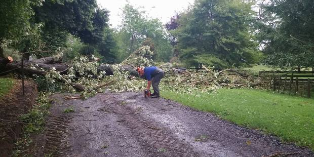 A large tree will take all day to clear. Photo / Supplied