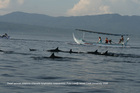 Spinner dolphins and tourist boats in Indonesia. Photo / Putu L Mustika