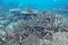 The bleaching last year of the reef