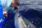 Fish like this striped marlin can be measured in the water and released. Photo / Supplied