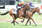 Jacksstar (9) has closed into second favourite for the Auckland Cup today. Photo / Race Images