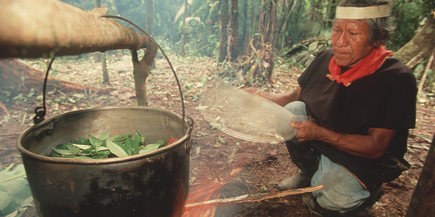 A shaman in the Coafan region boils leaves for their psychoactive proporties as used in ayahuasca, Ecuador, 2009. Photo / Getty Images