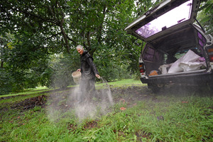 Organic Food growers. Chris Coney spreads organic fertilizer in the rain. Photo/George Novak