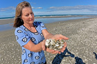 Janette McCallum felt horrified from the view of thousands of washed up pipi shellfish at Waihi Beach. Photo/George Novak