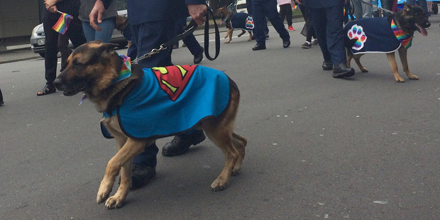 Police dogs turn out for the Wellington Pride Festival parade. Photo / Frances Cook