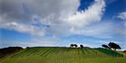 The wine and beef industry have significant exports in the US which are now uncertain. Photo / Brett Phibbs