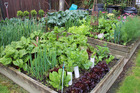 Growing your own vegetables has many benefits. Photo/file