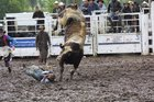 Cowboy Phil Gumbley aboard  Sasquatch in the bull ride during a previous Waimarino rodeo.