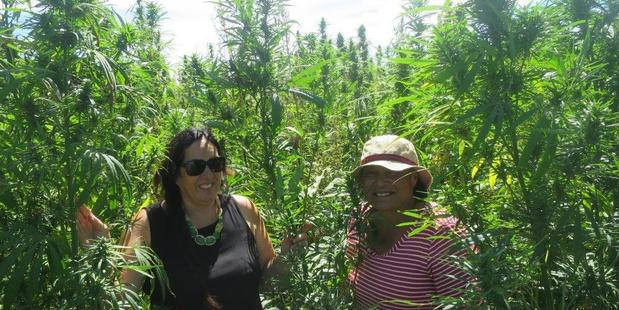 Tui Quaqua Te Paa and Aorangi Logan checking their trial crop of hemp recently. Photo/Supplied