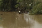 The stranded goat was munching on branches as it waited for the floodwaters to recede, firefighters say. Photo/Supplied