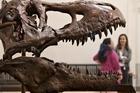 Tyrannosaurus Rex moves to a new branch on the dinosaur family tree in Matt Baron's study. Photo / AP